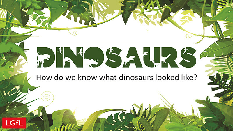 Teaching slides: How do we know what dinosaurs looked like?