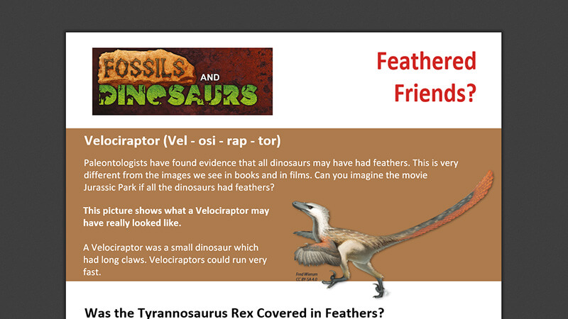 ACTIVEWORKSHEET: Feathered Friends